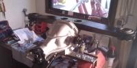 corvette-differential-uberholt